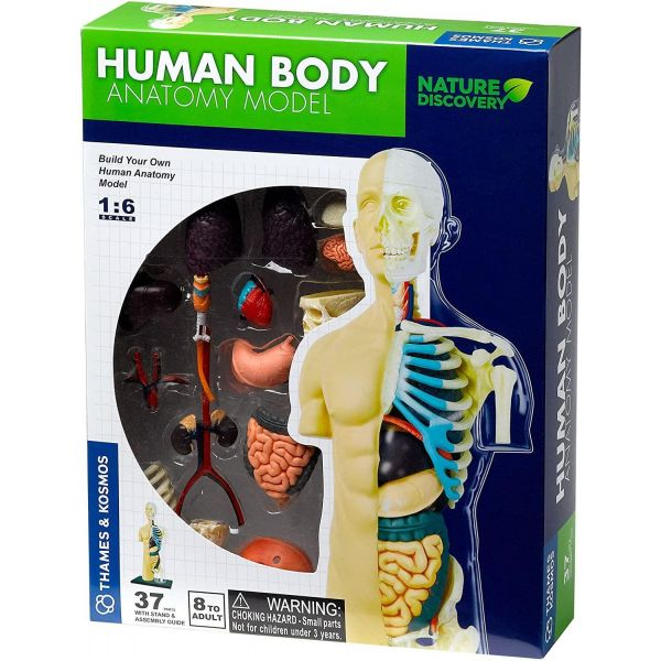 Thames and Kosmos Nature Discovery Human Body Anatomy